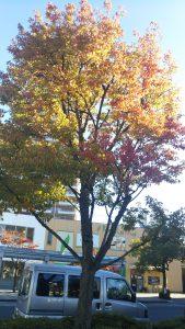 秋には美しく紅葉